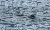 photo jokulsarlon seal 01_zps7lmw4zyr.jpg
