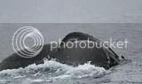 photo whales 09_zps1duk0tjh.jpg