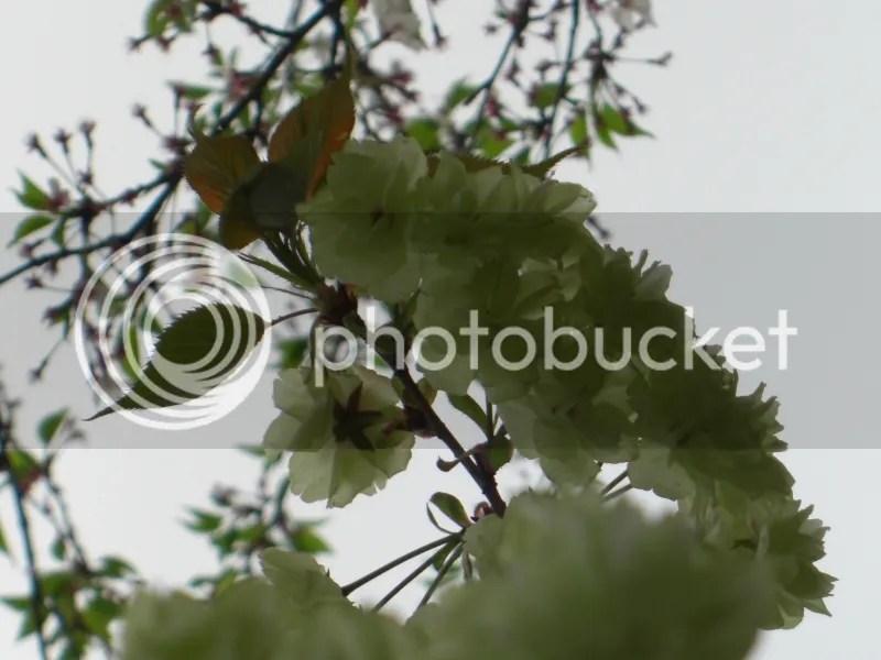 photo CIMG5223s_zpsff8c299c.jpg
