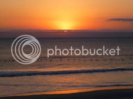 Pelicans at Sunrise photo sunriseandpelicans_zps19287aca.jpg