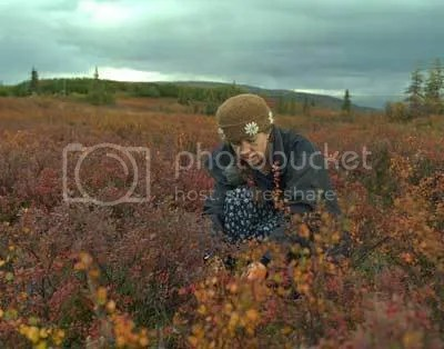 Carrie Cahill Mulligan picks blueberries in her signature brown Heirloom Handknit felt Hat at Wonder Lake in Denali Park, Alaska, 2002.