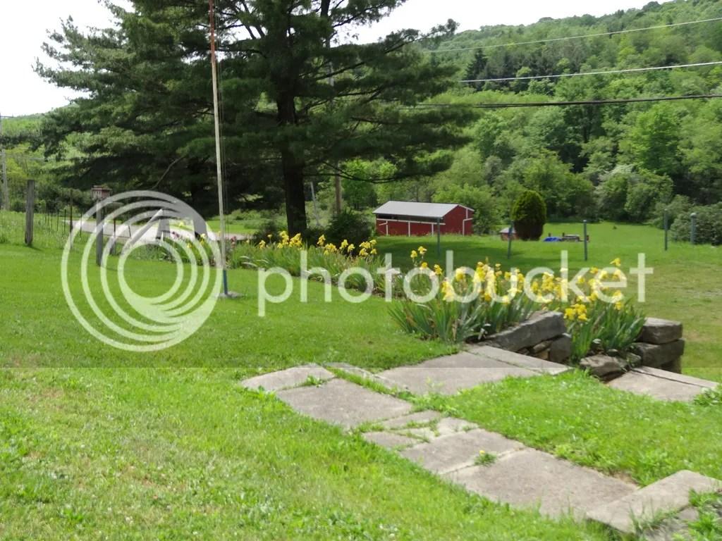 Serefine Farm-Iris Bead 2016 photo DSC02389_zps94kdb2na.jpg