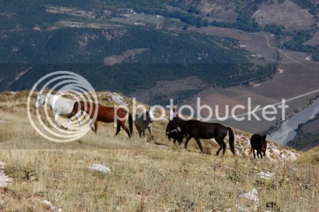 Horses In Nemercka