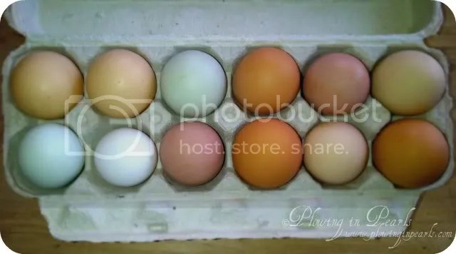 Mixed Eggs, Blue, Brown, Pink, White