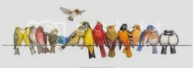 Birds On A Wire Pictures, Images and Photos