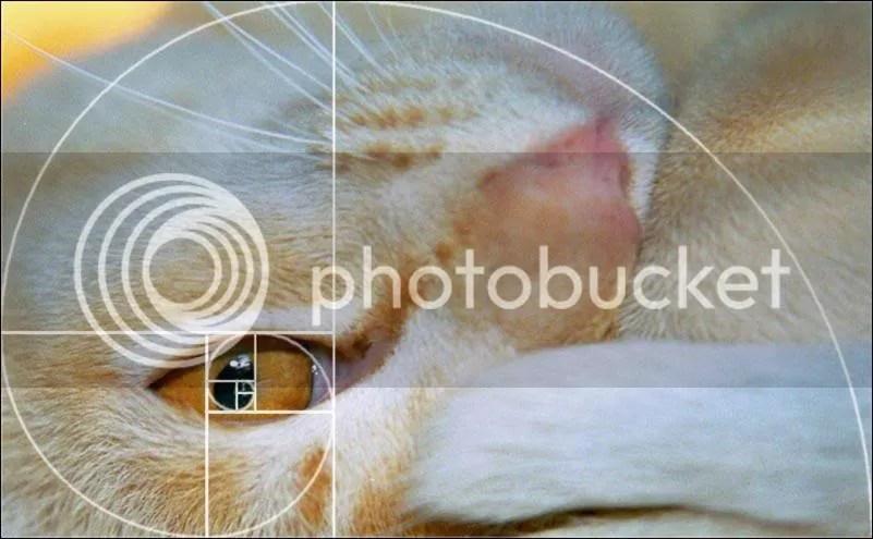 Bí ẩn Tỉ lệ Vàng Ф : Mật mã của vũ trụ - Phần 4 - www.toantrunghoc.com (Ảnh 22)