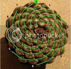 Bí ẩn Tỉ lệ vàng Ф, mật mã tạo thành vũ trụ - www.toantrunghoc.com (Ảnh 12)