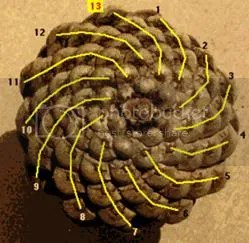 Bí ẩn Tỉ lệ vàng Ф, mật mã tạo thành vũ trụ - www.toantrunghoc.com (Ảnh 13)