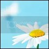 daisy icons photo: daisy icon icon5.png