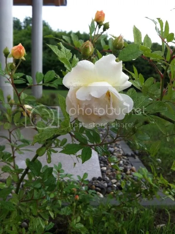 photo 22E9C486-9C7A-4D74-B442-CD12AEF35052-13832-000011291C9BFA6F_zpse111043d.jpg