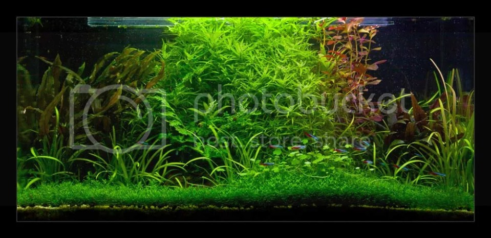 Schruz's Works - Wabi Kusa, Emersed setups, Planted tanks ...