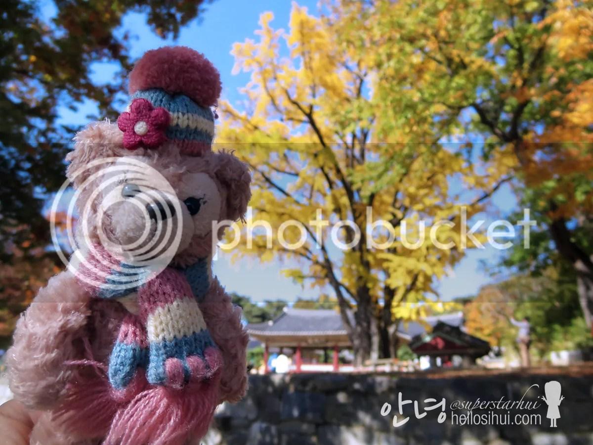 photo IMG_3849 copy_zpsx0ktykqv.jpg
