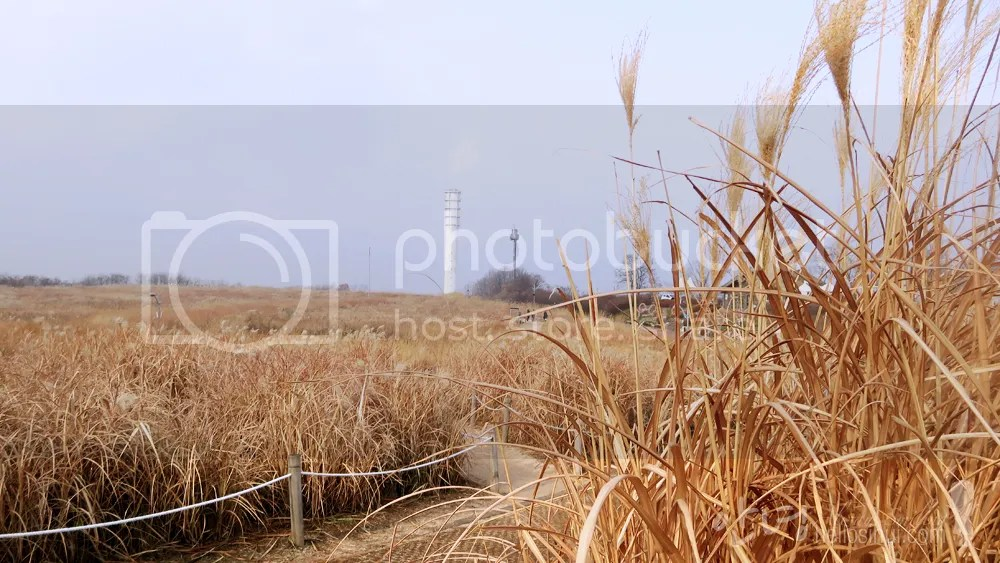 photo IMG_8048 copy_zpsuwckb63l.jpg