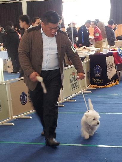 Ev nement expo canine k in korea - Oublier un coup de foudre ...