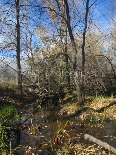 Poudre woodland photo Poudrewoodland_zps23ccdad4.jpg