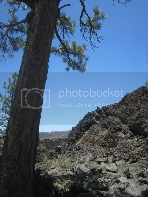 Sunset Crater lava bed photo Sunsettreelava_zps74ef4f06.jpg