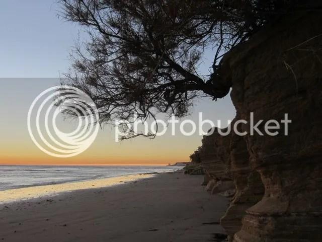 photo beachbush_zps84ff51bf.jpg