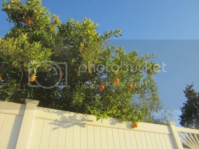 Oranges at dusk photo SoCalJune2013213a_zpscc0ddd8e.jpg
