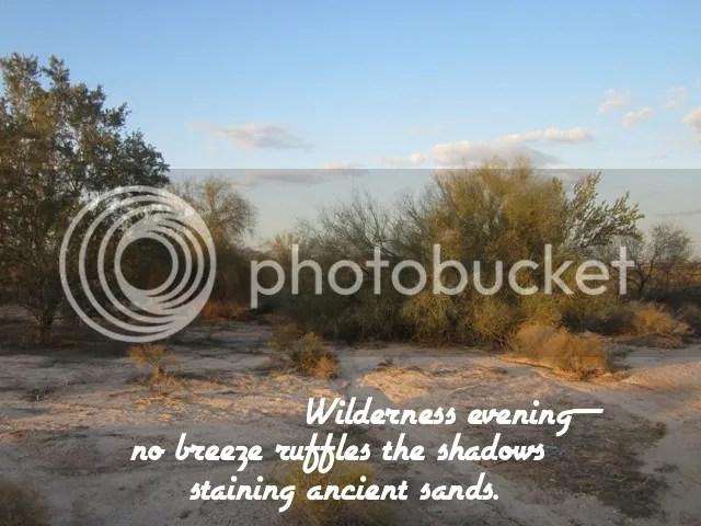 Wilderness evening photo 903bHAIGA2_zps6b2672cf.jpg
