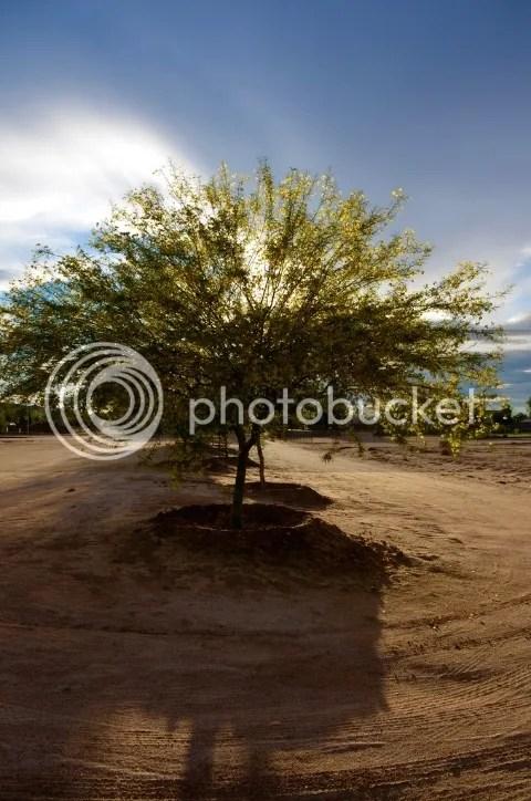 Palo verde landscape trees photo DSC_0004_zpshanexrsg.jpg