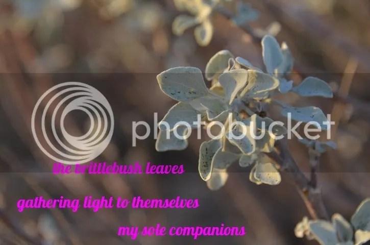photo Haiga.brittle.leaves_zpsycpwm974.jpg