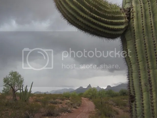 Organ Pipe Cactus NM photo OrganPipeAug2013309a_zps1c86bd45.jpg