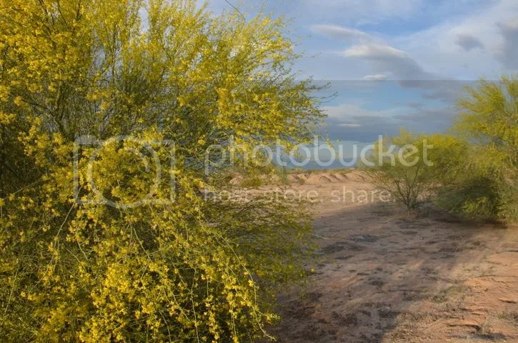 photo Sonoran.PVtree.shadows_zpsyboakemo.jpg