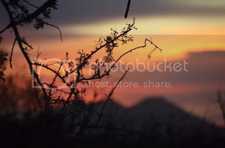 Thorny sunrise photo Sonoran.thorny sunrise_zps5jdlhqib.jpg