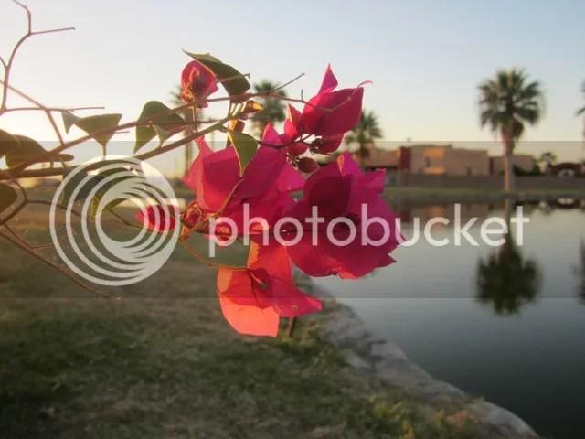 photo SonoranAug2013266a_zps345121b7.jpg