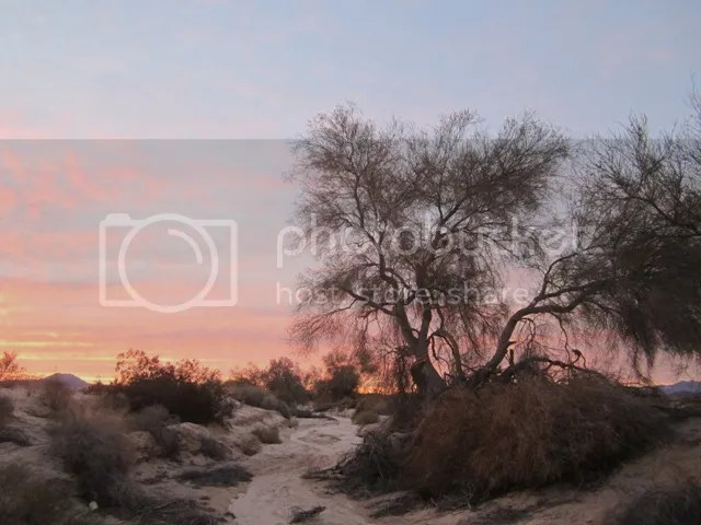 Twilight in the wash photo SonoranJan2013656a_zps21a0a58a.jpg