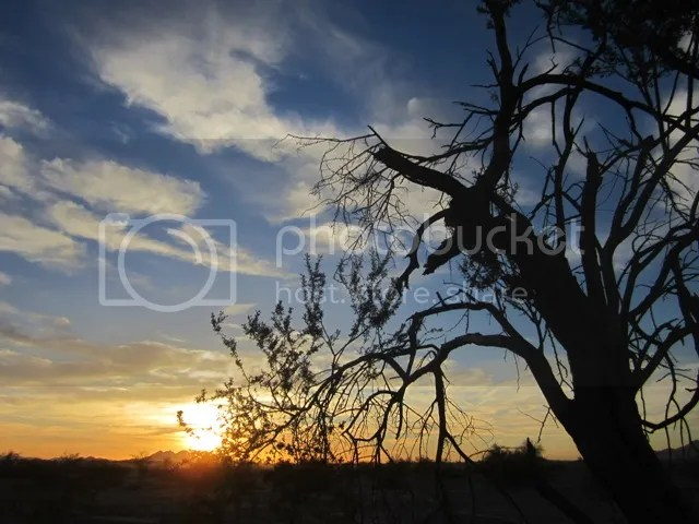 Sonoran sunrise photo SonoranMar2013501a_zps24588c07.jpg
