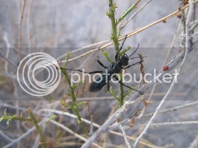 Bug at prayer