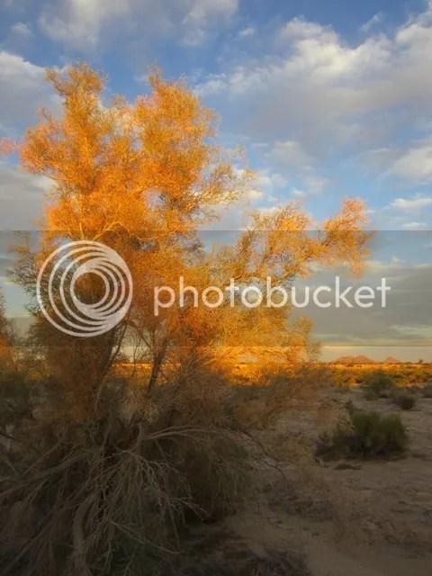 photo SonoranOct2013561a_zps6e84e27d.jpg