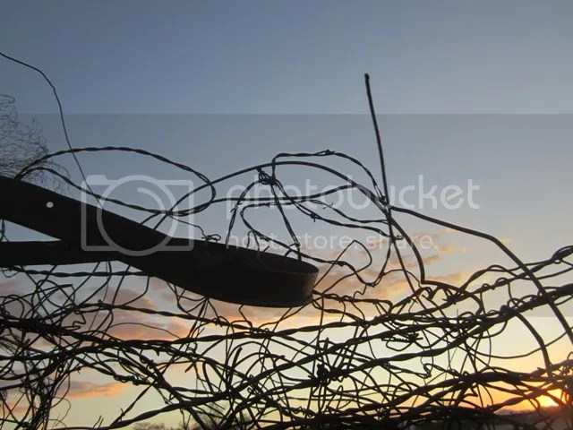 Tangled fence