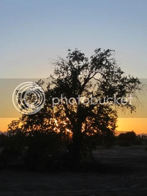 photo SonoranSept20131554a_zps20a8cdd9.jpg