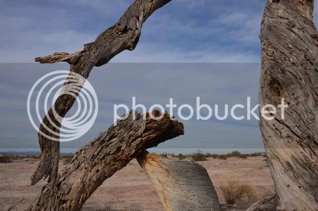 Deadwood window photo Sonorandeadwood_zps49694e73.jpg