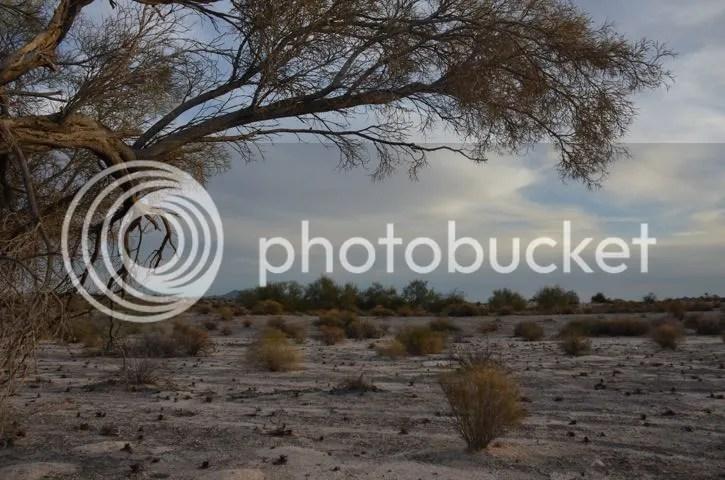 photo Sonoranindigobushwinter_zps9957973e.jpg