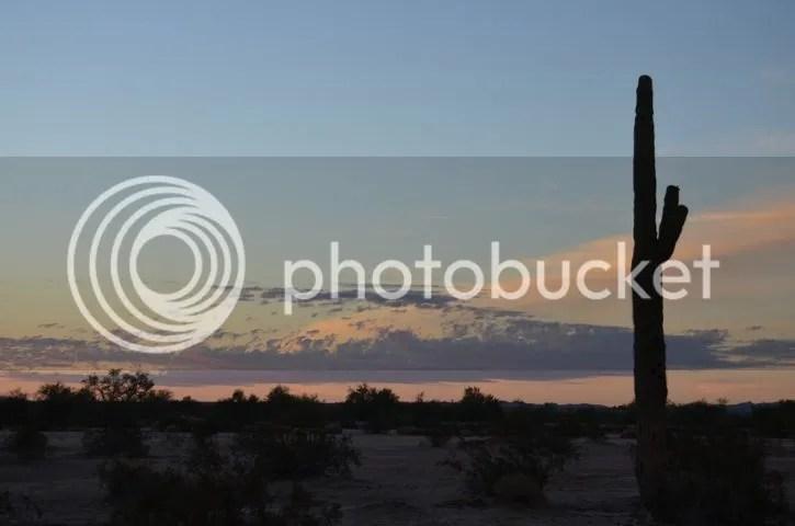 photo Sonoransaguaro_zps3f8febe6.jpg