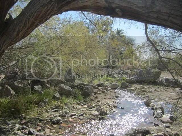 Creek photo ConsGardencreek_zpsc846ddf0.jpg