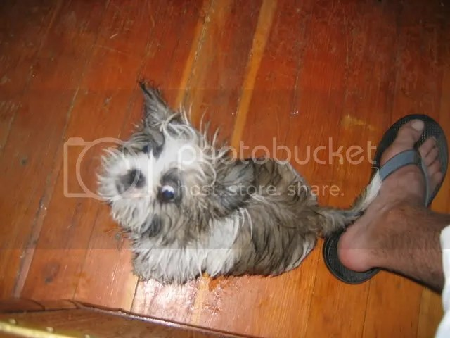 WallEye the Puppy