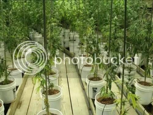 Marijuana Bust Underground