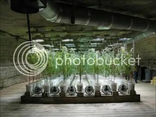 Huge Marijuana Grow Bust