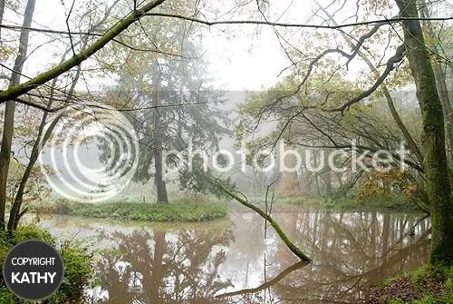 Leudal,wandeling,walk,bos,forrest,mist,fog