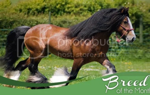 Clydesdale Abler