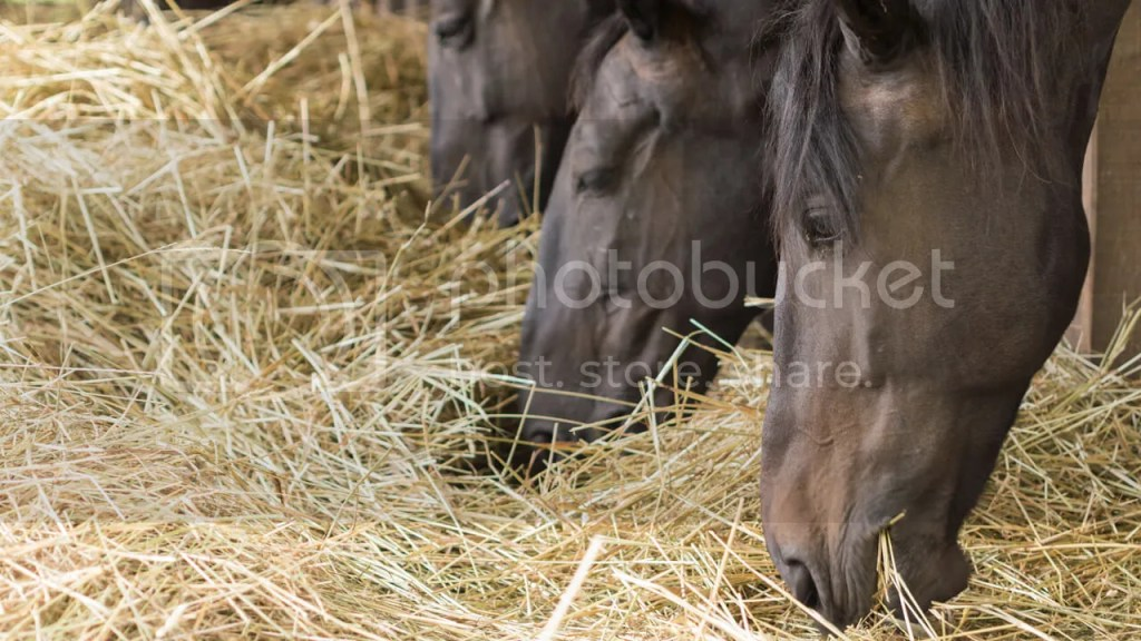 horse digestion