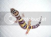 Heat Lamp for Leopard Gecko