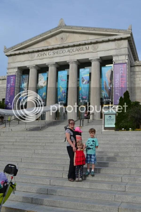 photo sheddaquariumchicagofamilytravel.jpg