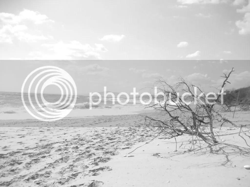 CODICE: A-15. TITOLO: Spiaggia borgo bonsignore