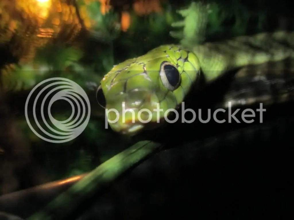 Docile Arboreal Snakes - Idee per la decorazione di interni - coremc us