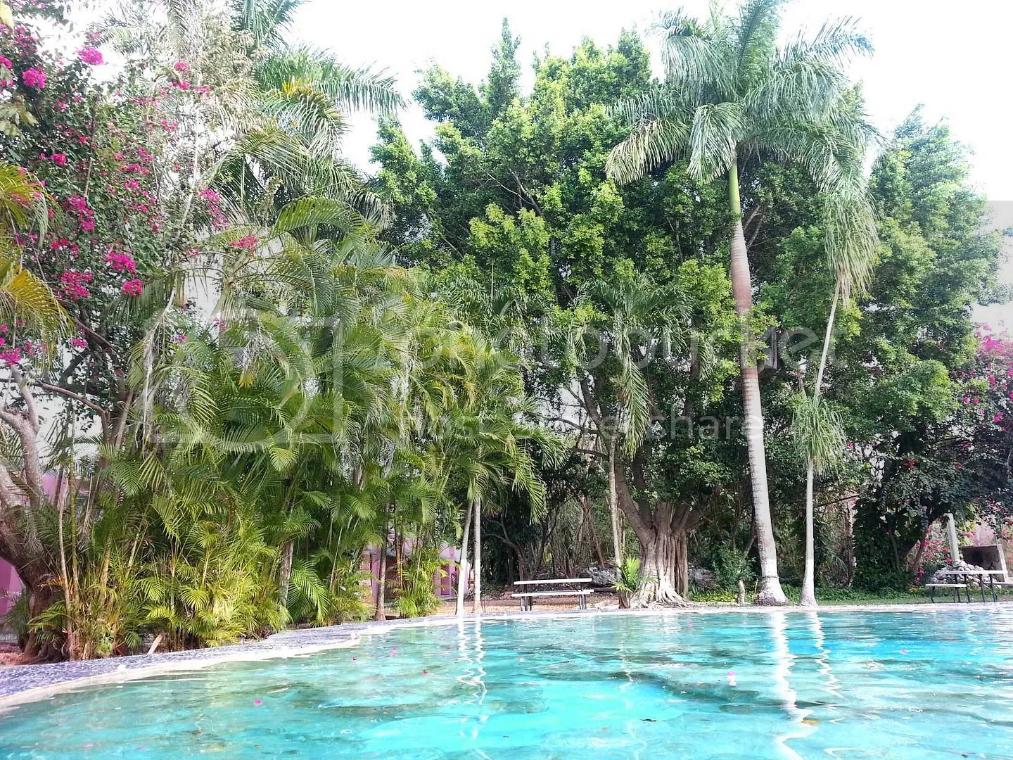 Hotel Pool Trees and landscaping beautiful